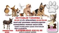KERMES - Antalya'da Sokak Hayvanları Yararına Kermes Düzenlenecek