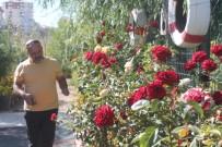 DÜĞÜN FOTOĞRAFI - Bataklık Olan Alanı Atatürk Sevgisi Sayesinde Botanik Bahçesine Dönüştürdü