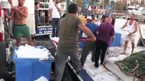 BATı KARADENIZ - Karadenizli Balıkçıların Ağları İstavritle Doldu