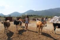 KÖPEK - 'Sibel'in Çiftliği'
