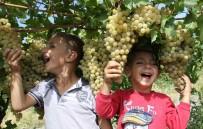 MEVSİMLİK İŞÇİ - Üzümde Bereket Yılı, Türkiye'nin Yarısı Elazığ'dan Ürün Alıyor