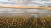 DOĞA FOTOĞRAFÇISI - Asboğa Gölü Turizme Kazandırılmayı Bekliyor