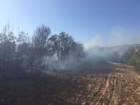 BÜYÜKDERE - Hatay'da Orman Yangını