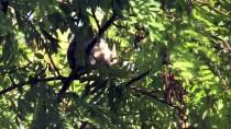 YAVRU KEDİ - Ağaçta Mahsur Kalan Yavru Kedi Kurtarıldı