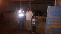 KıRKPıNAR - Çalındı Şüphesiyle Aranan Hayvanları Jandarma Dağda Buldu