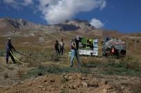 ERCIYES - Erciyes'ten Toplanan Tohumlar Erciyes'e Dikiliyor