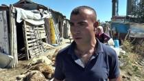 İSMAIL GÜNEŞ - 'Sokak Köpekleri Küçükbaş Hayvanları Telef Etti' İddiası