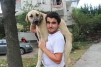 AHMET CAN - Hasta Köpeği Tedavi Ettirmek İçin Sırtında Taşıyan Koca Yürekli Genç Konuştu
