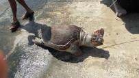 CARETTA CARETTA - Kaş'ta Ölü Halde Caretta Caretta Bulundu