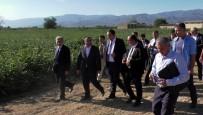 İBRAHIM KÜÇÜK - Türk-Özbek İşbirliği Pamuğa Yarayacak