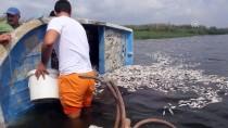 ASI NEHRI - Hatay'da Balık Ölümleri