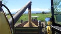 19 MAYıS - Samsunlu Çiftçi Çeltik Üretiminden Memnun
