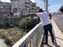 Alaplı'da 'İsrail Sazanı' Avı Başladı