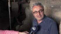 TURİZM BAKANLIĞI - Antandros'ta 'Pitos Mezar'lara Rastlandı