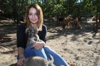 SEBZE HALİ - Bahçesinde Sokaklardan Kurtardığı 100 Köpeğe Bakıyor