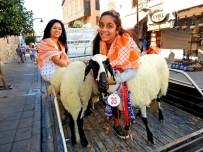 GÜMRÜK MÜDÜRÜ - Çeşme'nin Ünlü Sakız Koyunları Yarıştı