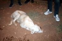 KÖPEK - Midyat'ta Gözü Oyulmuş Köpek Bulundu