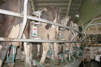 Afyonkarahisar'da Avrupa Standartlarında Süt Üretiliyor