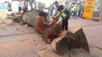 TEVFİK İLERİ - Asırlık Olduğu İddia Edilen Çınar Ağacı 75 Yıllık Çıktı
