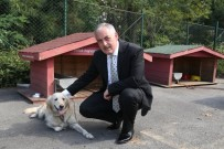 OTOMASYON - Başkan Aydın'dan Sokak Hayvanları Açıklaması