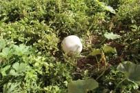 Bu Bahçenin Ürünleri Okul Ve Öğrenciler İçin