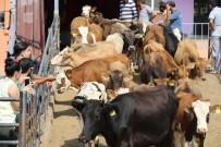BÜYÜKBAŞ HAYVANLAR - Elazığ'da Genç Çiftçilere Hayvan Desteği