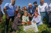 YıLDıZLı - Gaziantep Fıstığı Dünyaca Ünlü Michelin Yıldızlı Şeflerin Reçetesine Giriyor
