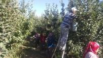 ABDULLAH AKDAŞ - Isparta'da Bu Yıl 630 Bin Ton Elma Rekoltesi Beklentisi