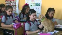 KITAPLıK - Kedi 'Tombi' Yaz Tatilinin Ardından Okula Döndü