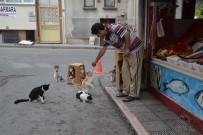 ALİŞAN - Kediler Balıkçının Önünde Nöbet Tutuyor