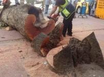 MANIPÜLASYON - Rize Belediyesi'nden Kesilen Çınar Ağacı İle İlgili Açıklama Yapıldı