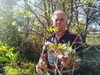 ORMAN MÜDÜRLÜĞÜ - Vişne Ağacı Sonbaharda Çiçek Açtı