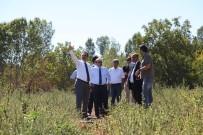 MUSTAFA AKGÜL - Ahlat'ta Cumhurbaşkanlığı Köşkü İçin Yer Tespit Çalışması