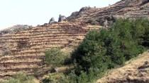 İLKBAHAR - Aras Dağları'nda Erozyonla Mücadele Hamlesi