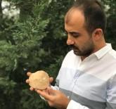 Diyarbakır'da 47 Milyon Yıllık Deniz Canlısı Fosili Bulundu