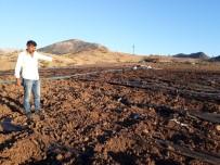 Domuz Sürüleri, Çilek Üreticilerini Zor Durumda Bıraktı