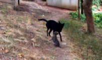 YAVRU KÖPEK - Düştükleri Su Kanalından Kurtarılan Yavru Köpeklerin Anne Sevinci