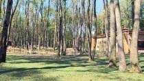 DOĞAL YAŞAM PARKI - 'Ormanya' Hayvan Popülasyonuna Katkı Sağlayacak