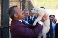 Türkiye'nin En İşlevsel Hayvan Bakımevi Tunceli'de Açıldı