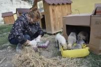 Burdur'da Sokak Hayvanları Beslendi