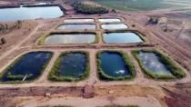 FIRAT NEHRİ - 'Fırat'ın Balıkları' Ekonomiye Katkı Sağlıyor
