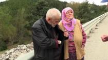 Kastamonu'da Aracın Çarptığı Bozayı Telef Oldu