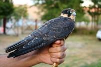 ERKEN UYARI SİSTEMİ - Kuşlar Söyledi Kış Erken Geliyor