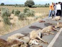Yolcu otobüsü sürüye çarptı, çoğu gebe 65 koyun telef oldu