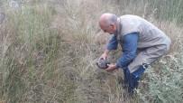 KıRıKKALE ÜNIVERSITESI - Zifte Bulanmış Kaplumbağayı Vatandaş Kurtardı