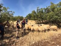 Kayıp Koyunlar Jandarma Ekipleri Tarafından Bulundu