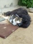 Kedi İle Köpeğin Kıskandıran Dostluğu