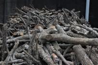 GARIBAN - Odun Ve Kömür Cep Yakıyor