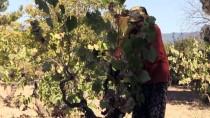 FERIŞTAH - Üzüm Asırlık 'Çarpına'da Lezzete Dönüşüyor
