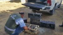 KıNALı - Van Dkmp, 2'Si Kadın 3 Keklik Avcısına Ceza Yağdırdı